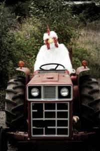 chicken tractor?