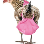Chicken Diapers – Bring Your Chickens into the House
