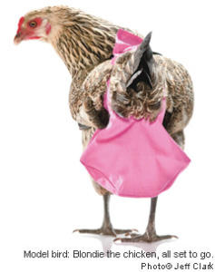 Chicken Diapers for Sale